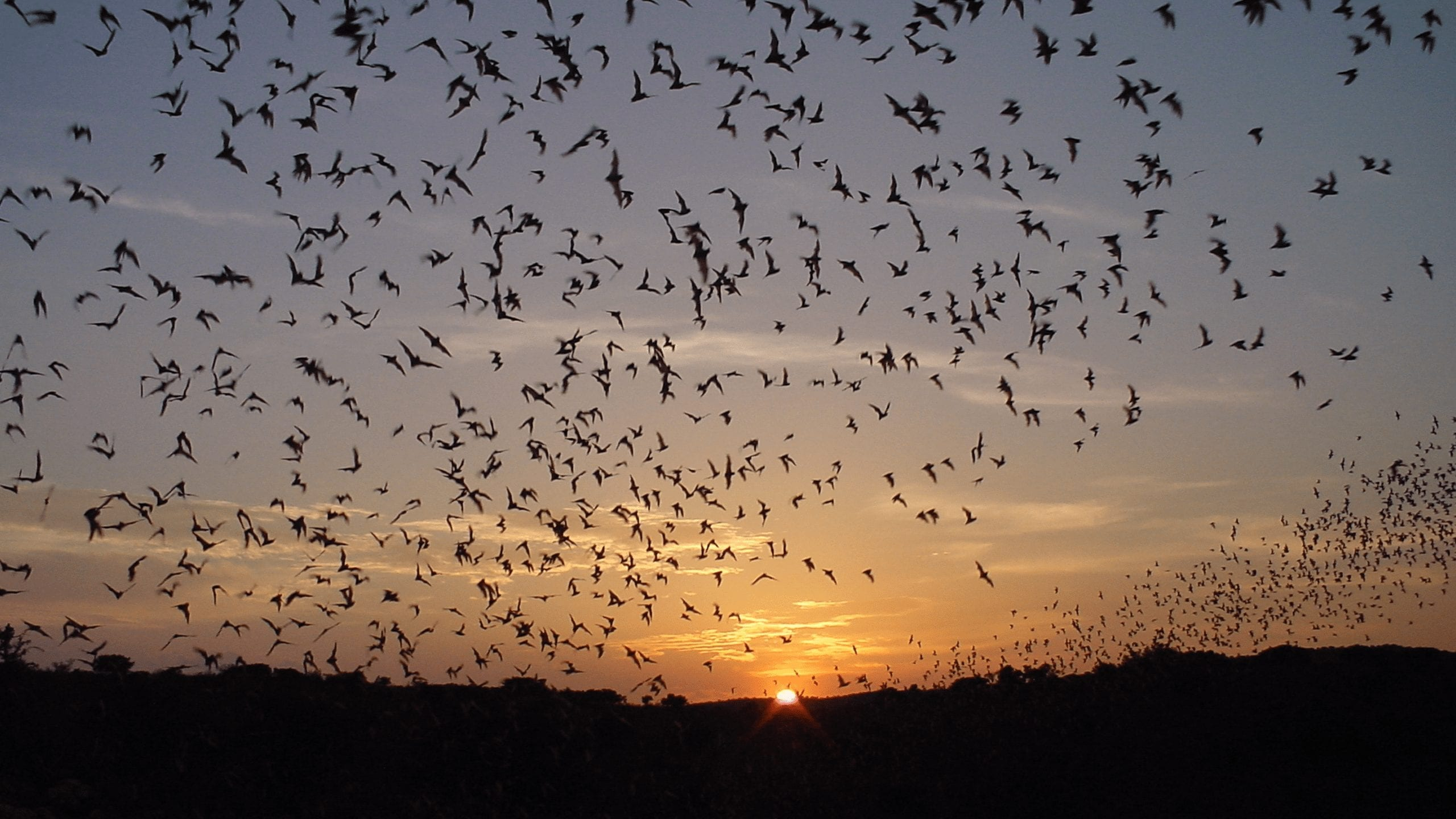 The Batty Parks with Bats!