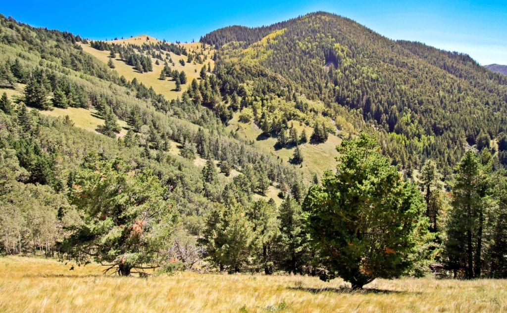 Lincoln National Forest with Mountains and Trees