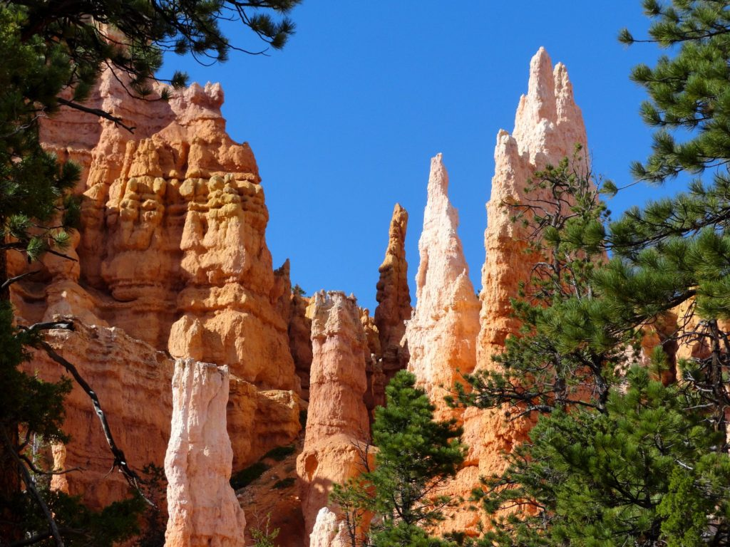 View of hoodoos behind trees in the Queens Garden area of Bryce Canyon National Park